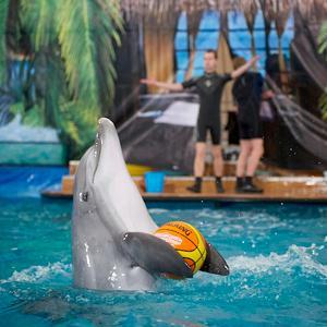 Дельфинарии, океанариумы Большого Села