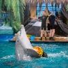 Дельфинарии, океанариумы в Большом Селе