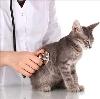 Ветеринарные клиники в Большом Селе